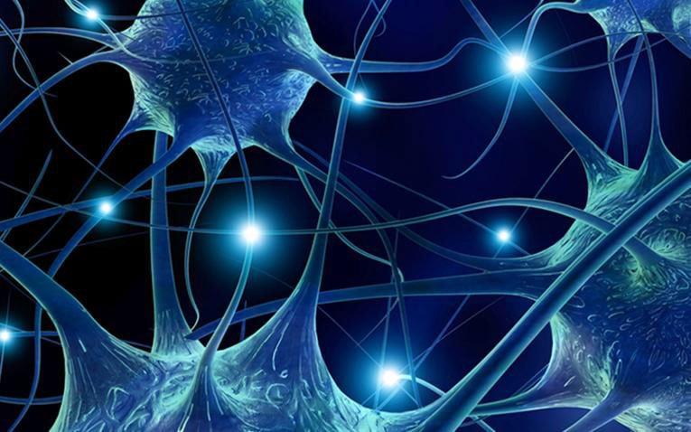 Wie sich CBD-Öl auf unser Endocannabinoid-System auswirkt?